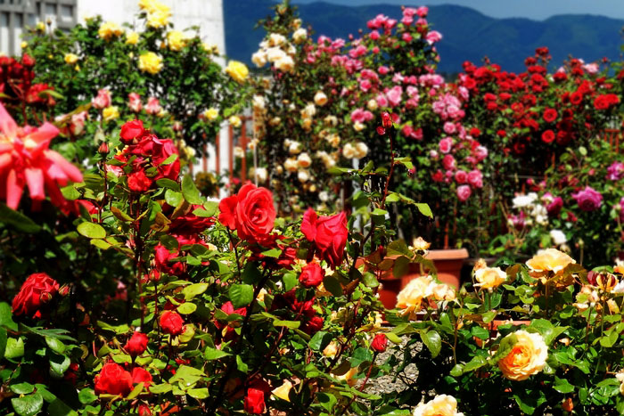 visit kazanlak rose garden, holidays to bulgaria, to bulgaria holidays, bulgaria holidays to, kazanlak valley of roses, thracian kings, kazanlak
